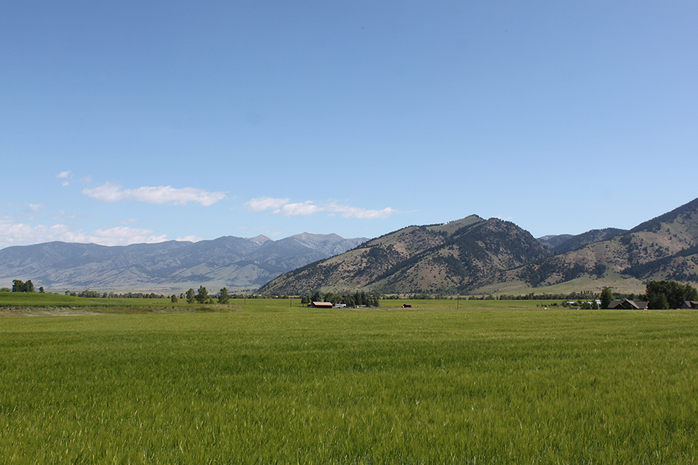 Beautiful Montana Pasture